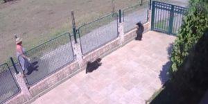 Snimak otkrio komšinicu monstruma: Crnogorka otrovala psa iz susednog dvorišta, pa gledala kako umire u mukama
