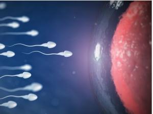 """Kako žensko telo """"blokira"""" slabe spermatozoide"""